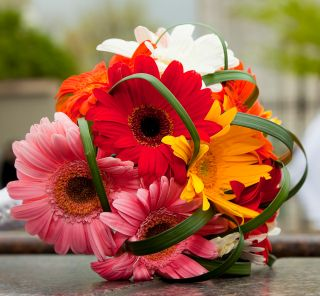 Gerberas - larger hand tied bouquet